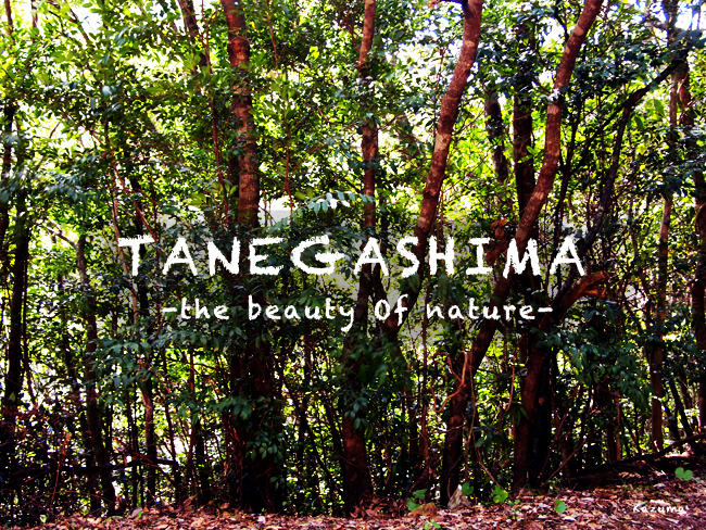 tanegashima nature blog.jpg